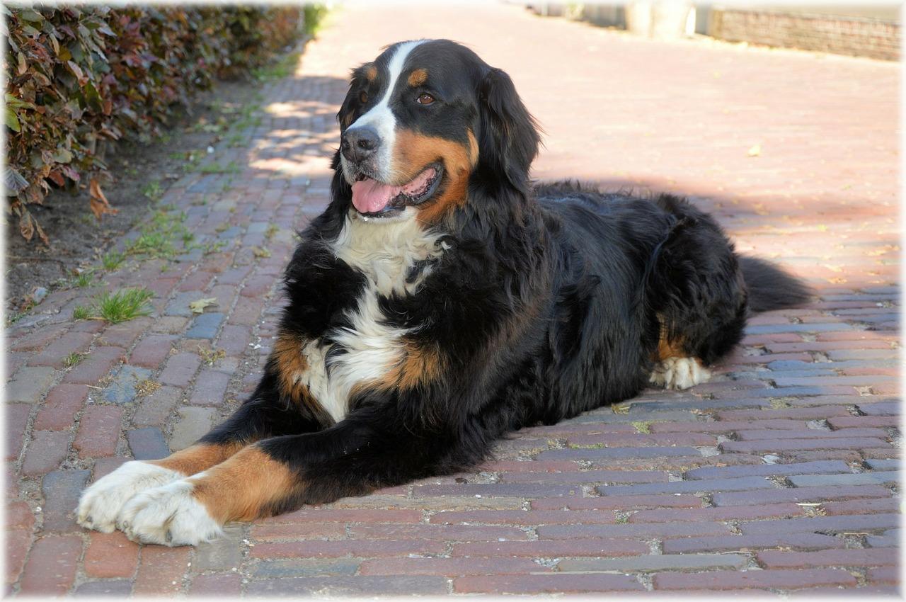 colorado springs mountain dog